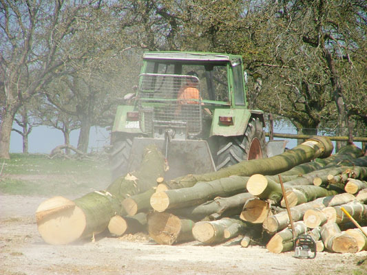 Holz-Abtransport