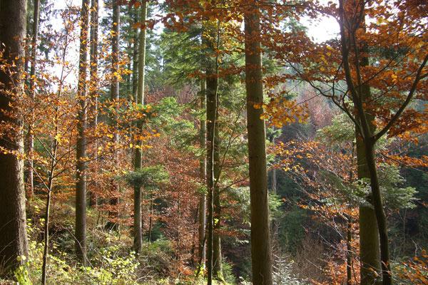 Schönbronner Wald im Herbst