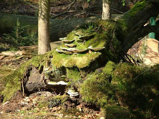 Schönbronner Wald