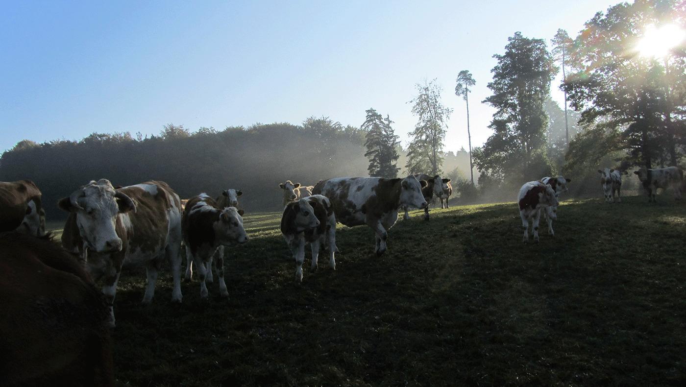Unser Naturhof Rinder