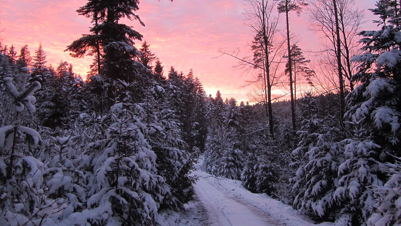 Unser Naturhof Winterwald